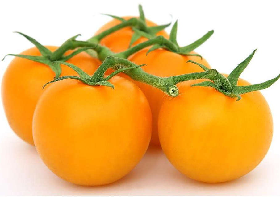 Tomato Orange Grosse Lisse