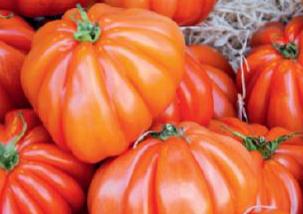 Tomato Sauce Maker