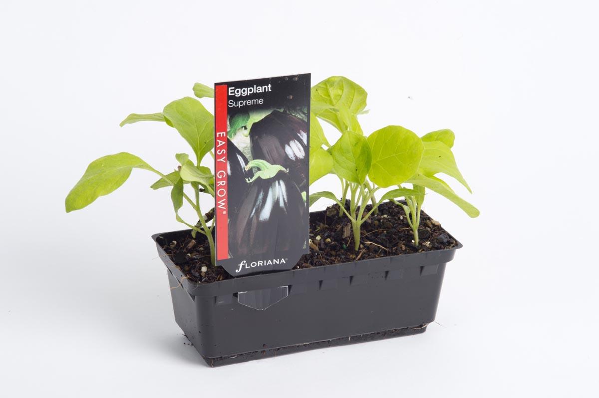 Eggplant Supreme