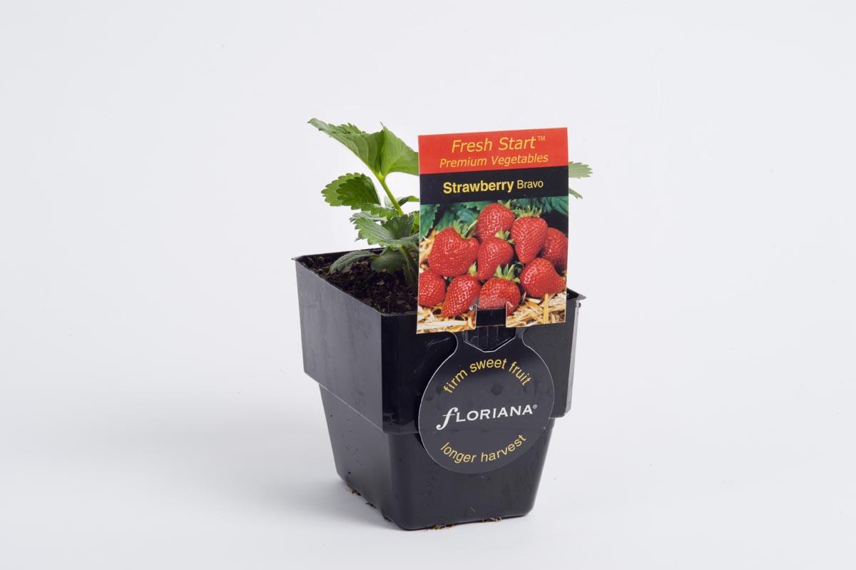 Strawberry Bravo