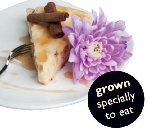 Dahlia Edible Flower