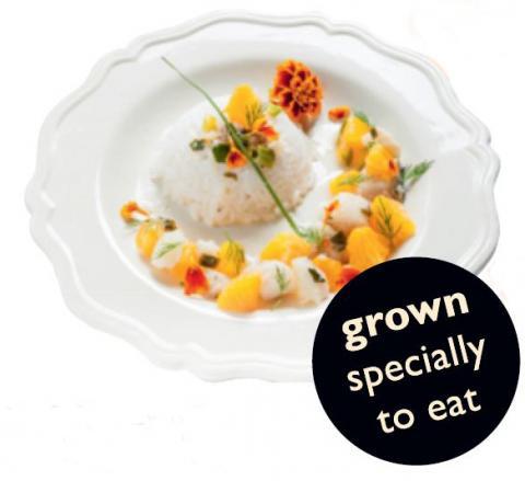 Marigold Edible Flower