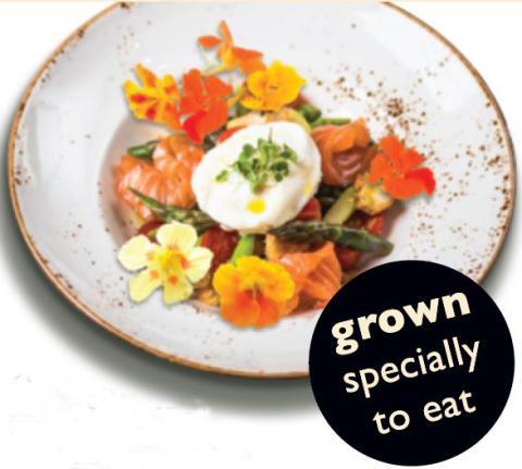 Nasturtiums Edible Flowers