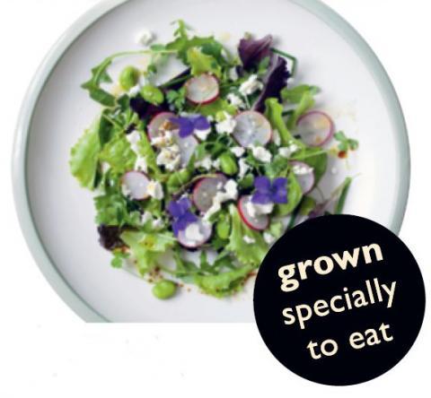 Stock Edible Flower