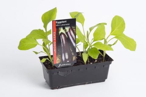 Eggplant Mini Lebanese