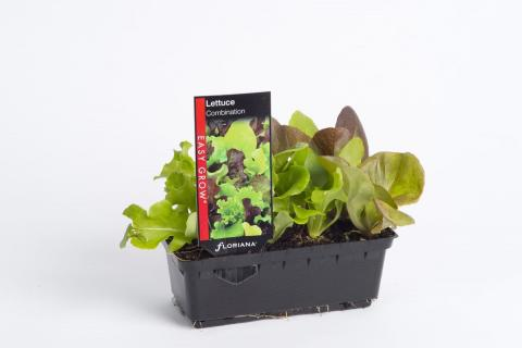Lettuce Combination